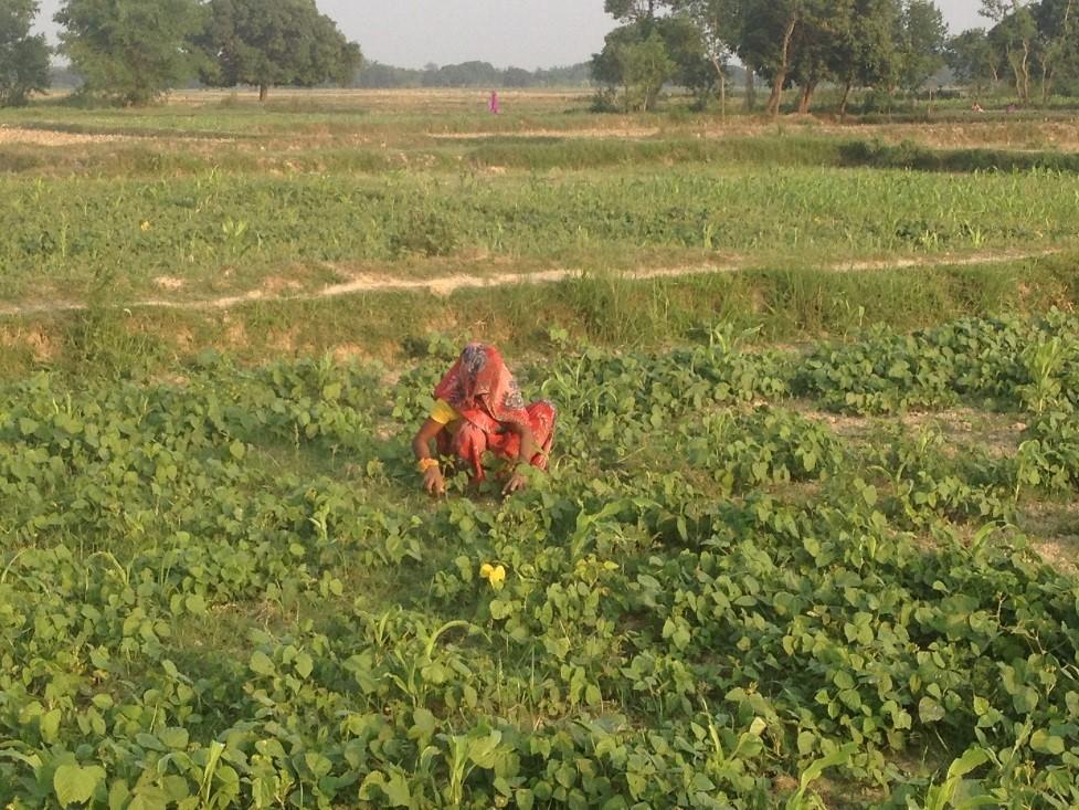 Site selection visit - Madhubani