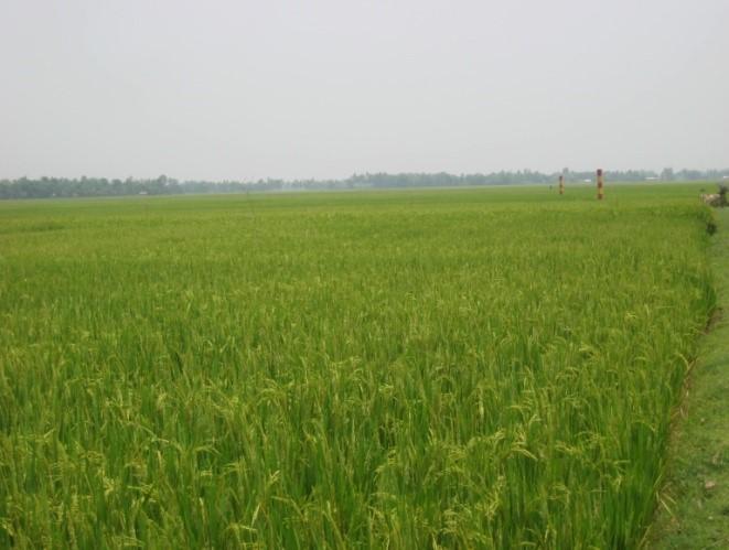Thakurgaon2